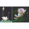 Woman Fashion Lotus Fresh Flower Silver Ring image